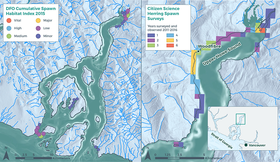herring-dfo-cumulative-spawn-habitat-citizen-science-spawn-survey-map